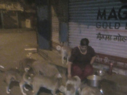 Feeding Program, Vaccination drives&Emergency fund for Vikhroli Strays