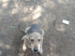 Help Josef Dinesh Protect Dogs In His Village and nearby localities