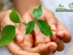 Offset your carbon footprint - Create your own green patch
