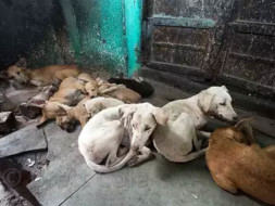 DOG STERILISATION CAMP