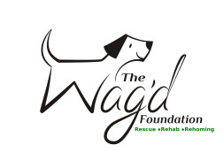The Wag'd Foundation Rescue & Rehab Centre, Bangalore
