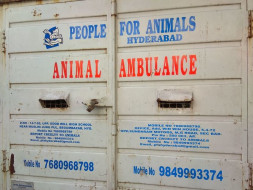 Funds required for rescue of animals