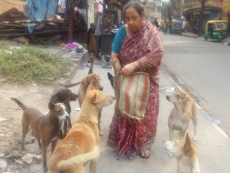 Help Me In Feeding, Treatment & Welfare Of More Than 150 Stray Dogs