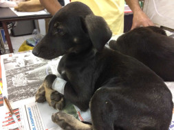 Help These Puppies Fight Against Parvo