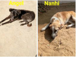 Help Angel And Nanhi To Fly To Their Forever Homes