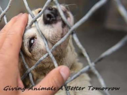 Help Us Rebuilding A Happy Animal Shelter