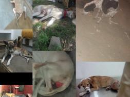 Help-Romeo-Chanda-Mirchi-Sitara-Asia-Kali-Pilli