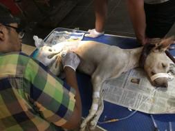 Helping street animals