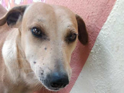 Help 'Sundari' Lead A Happy Dog's Life.