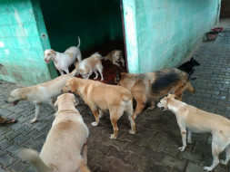 Help INCARE To Save More Dogs.