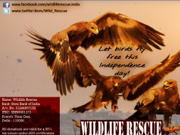 Save Birds of Delhi!!!