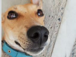 Help Chennai's Street Dogs: Spay the Strays Chennai