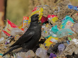 Help Sachin to make Himalaya plastic free #Banplasticinhimalaya