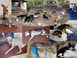 Rescue Relief Sterilise Rehabilitate wounded abandoned abused animals.