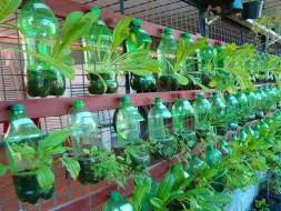 Help Shyam Building Eco-friendly Organic Vertical Garden