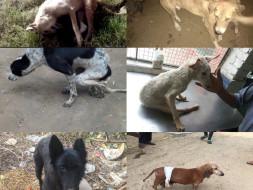 Mishti-Sitara-Chanda-Ginger-Mirchi- help to clear pending Bills