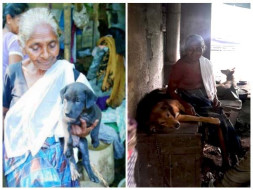 Help Ammini Amma to Build Shelter for her Dogs