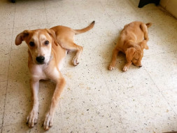 Help four rescue puppies travel to their forever home 1700km away