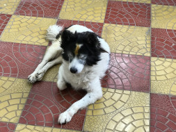 Help My Pet Suffering From Disease