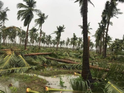 "Help My Home to Recover from the Effect of Cyclone 'Gaja' ""Save Delta"""