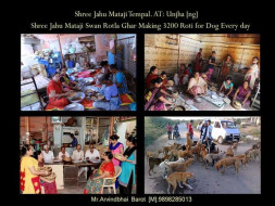 Help Us Provide Help to Street Dogs