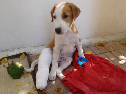 An animal shelter to indoor injured and ill stray animals