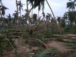 Rebuild Aayakaranpulam/Panchanathikulam Villages After Cyclone Gaja