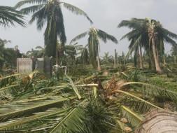 Help Cyclone Struck Pattukkottai Taluk in Tamil Nadu