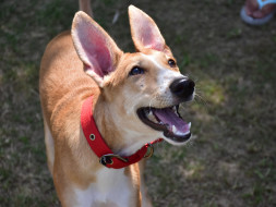 Help Ripley Find Her Forever Home