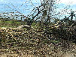 Help Our Village Panchanathikulam Recover From Cyclone Gaja's