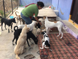 Home For Stray Animals -Angel's Fund