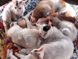 Help provide shelter to my cats and kittens