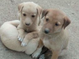 Help These Little Ones Get a Home
