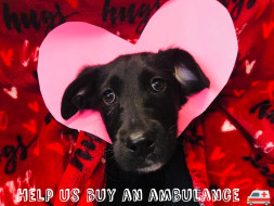 Help Us Buy A New A.R.V(Animal Rescue Van)