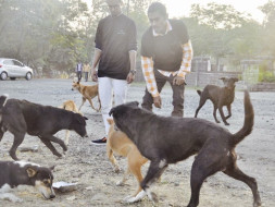 Help Us Feed Stray Dogs Everyday