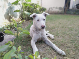 Help Ozzo (A special needs pup) To Fly Home