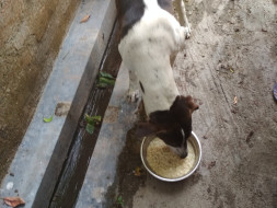 Help Street Dogs Get Food, Sterilization and Vaccination