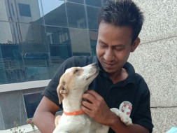 Support Awaaz In Helping Stray Animals