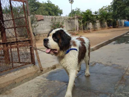 Help Himalaya Recover And Find His Family