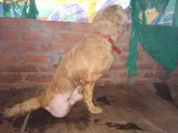 Help Rescued Animals of Guwahati