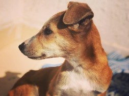 Help Moses The Indian Street Pup Reach The US To Find A Family!