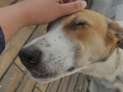 Suffering from Distemper please Help Innocent stray Dog Mickey