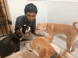 Help Sai Vignesh to build a sanctuary for animals