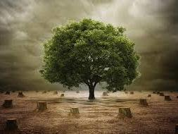 We need help to 1000 tress growth in Village