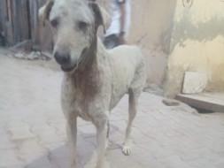 Help us help strays