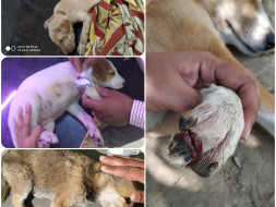 Support Stray Dogs Get Treated