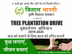 Help Us Plant Trees Today