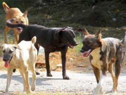 Help Raise funds for the Stray Dogs