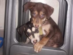 Help Choco & Husky to fly