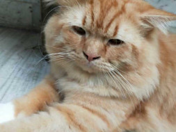 Help A Tabby Cat Get A Better Future